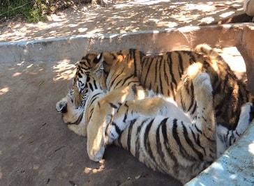 Seaview Lion Park in Port Elizabeth